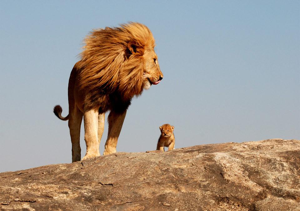 Il bello di essere padri